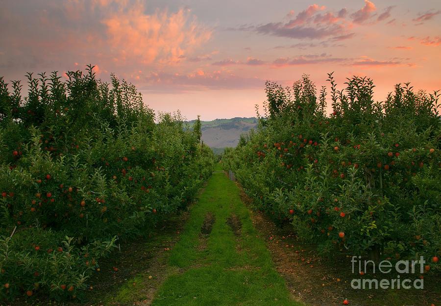 Red Apple Sunset Photograph