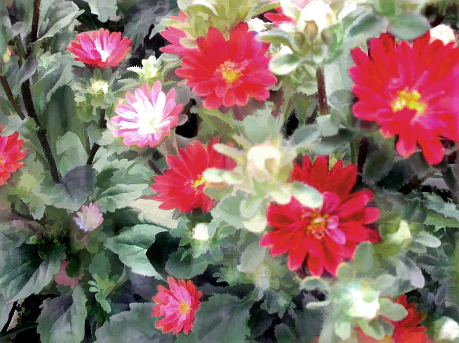 Red Asters Painting  - Red Asters Fine Art Print