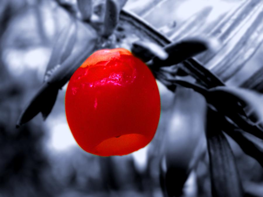 Red Bell Photograph  - Red Bell Fine Art Print