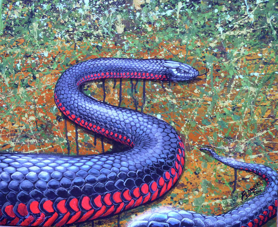 how to get rid of a red belly black snake