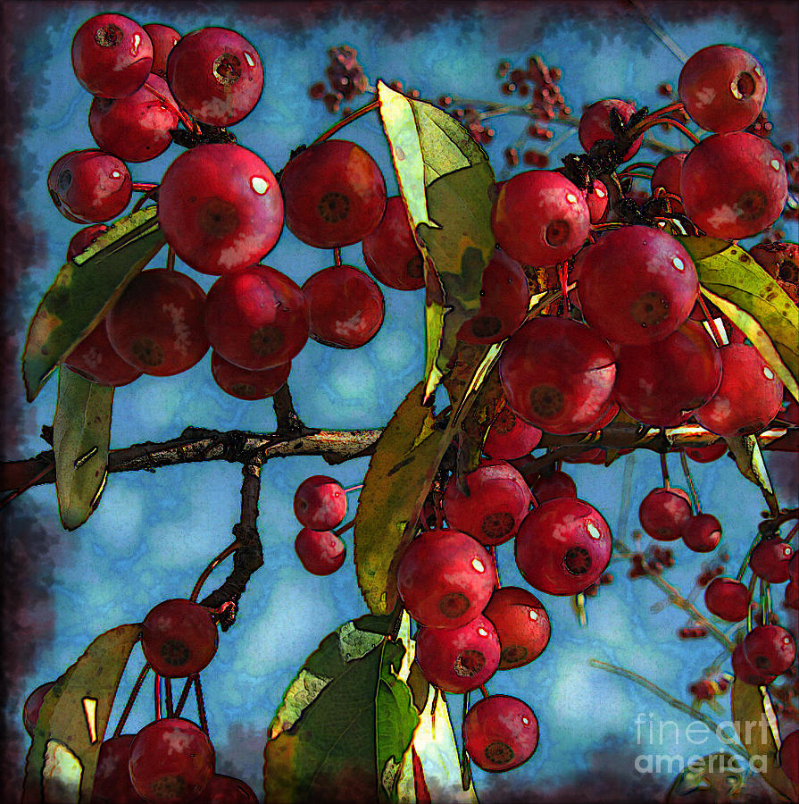 Red Berries Photograph  - Red Berries Fine Art Print
