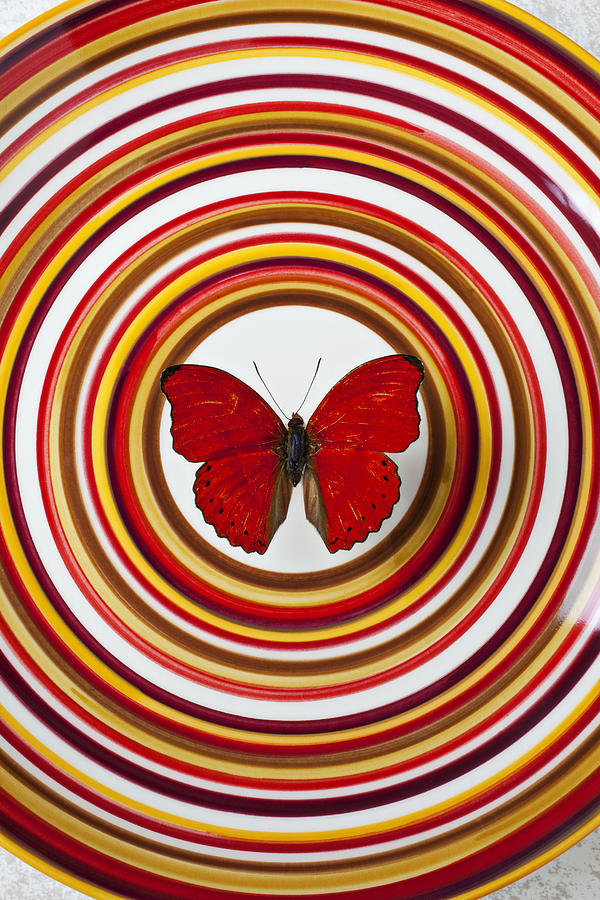 Red Butterfly On Plate With Many Circles Photograph