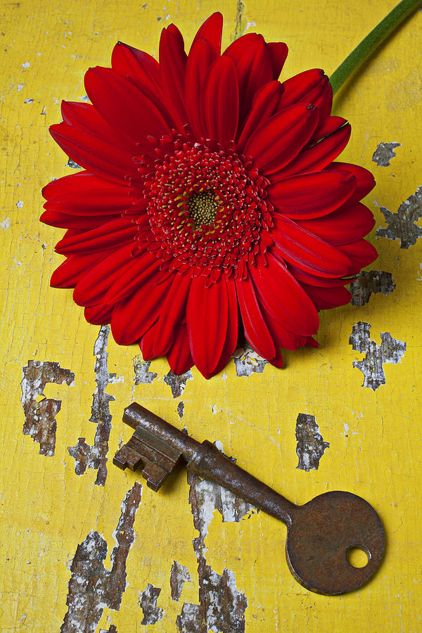 Red Daisy And Old Key Photograph  - Red Daisy And Old Key Fine Art Print