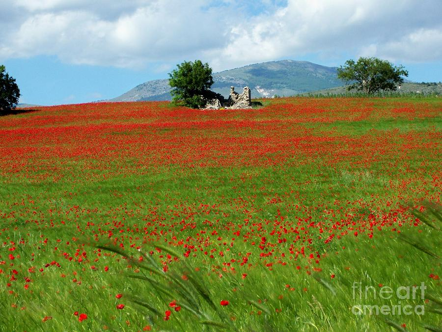 Red Fields Photograph