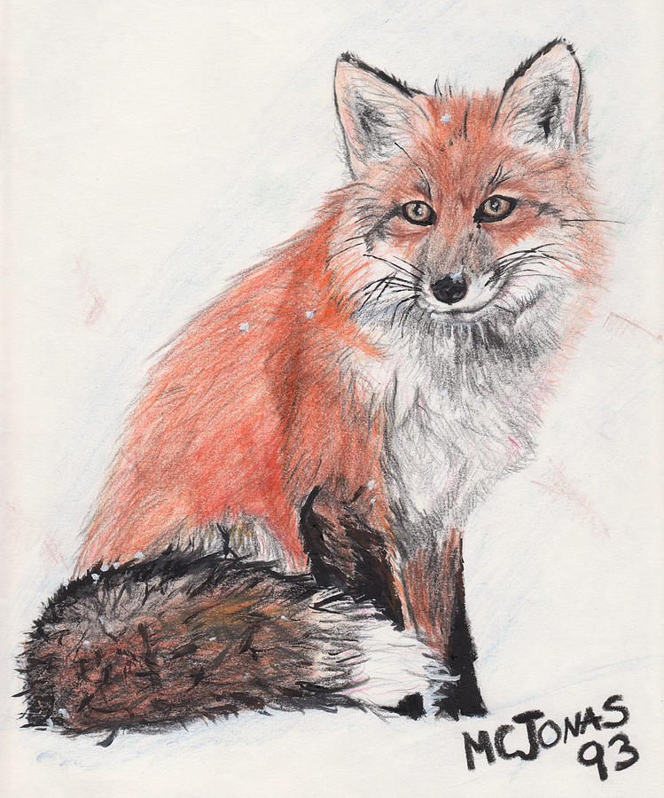 Red Fox In Snow Drawing  - Red Fox In Snow Fine Art Print