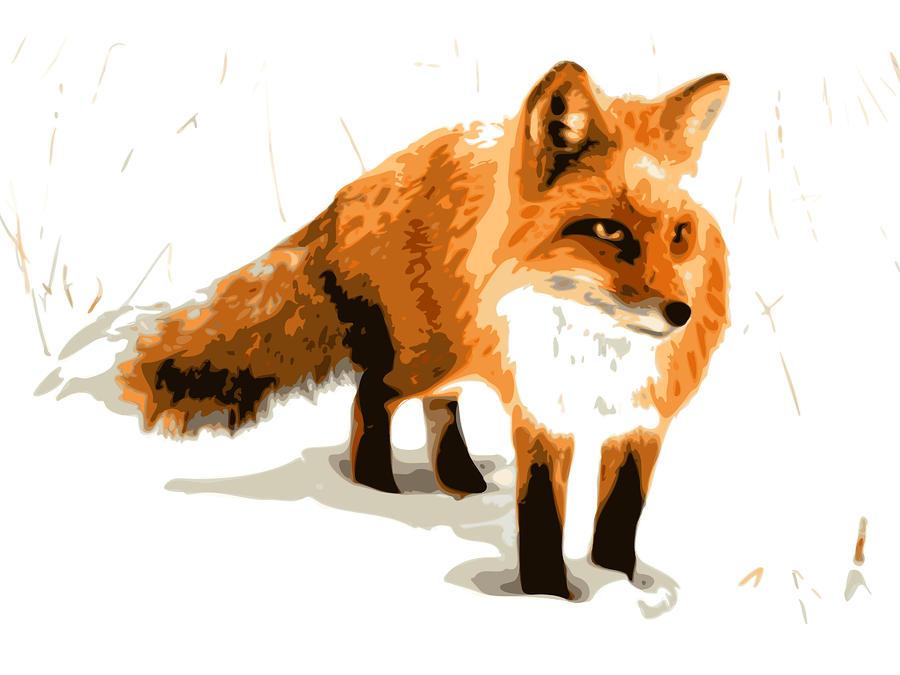 Red Fox In Winter Digital Art