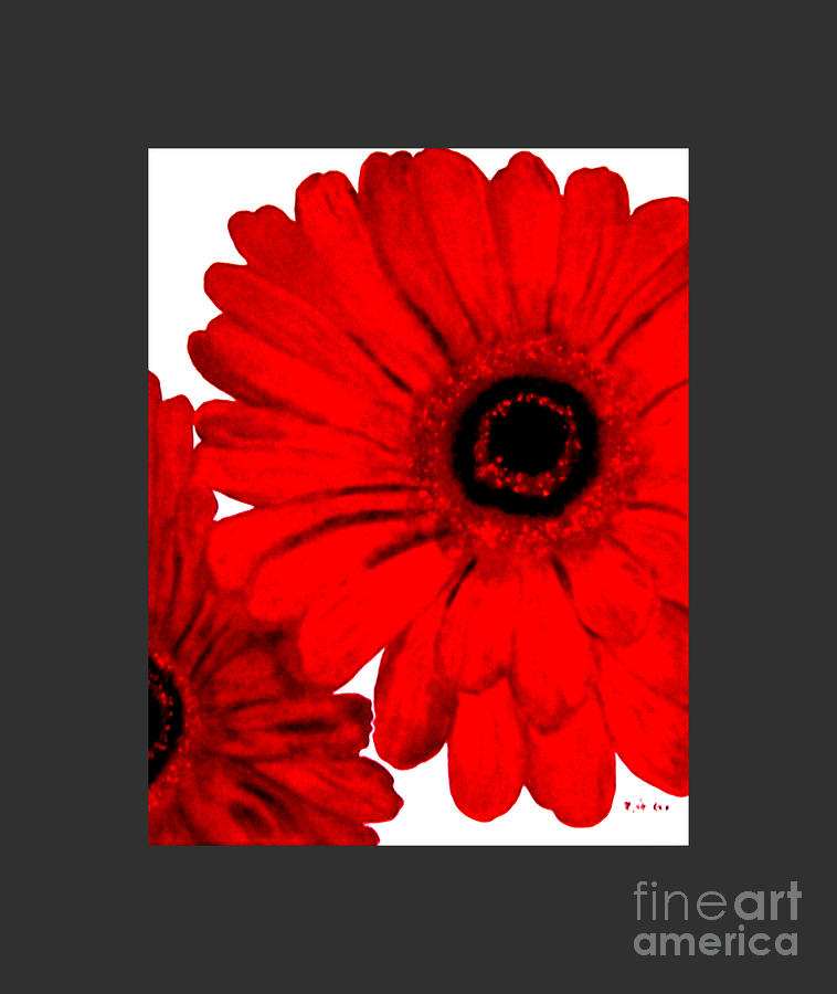 Red Gerber Border     Digital Art  Painting
