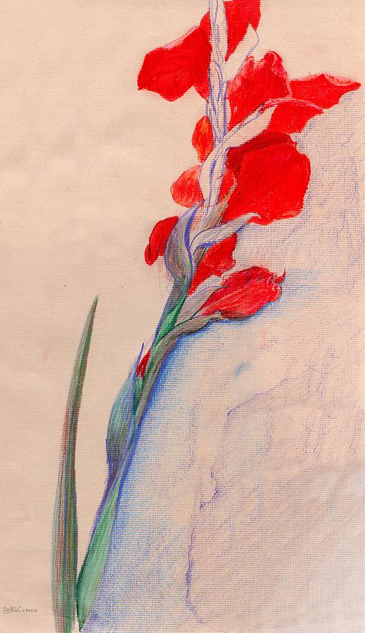 Red Gladiolas Drawing  - Red Gladiolas Fine Art Print