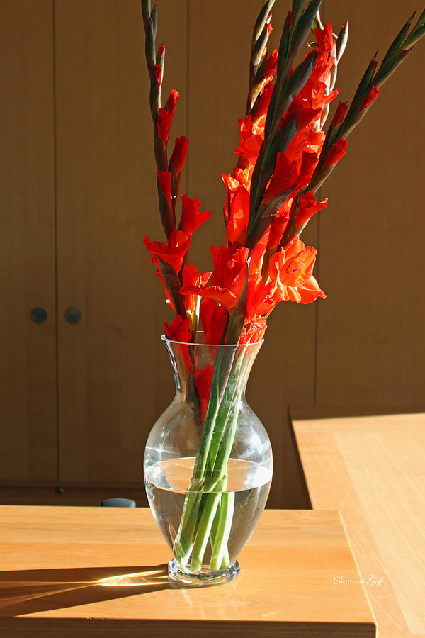 Red Glads Photograph