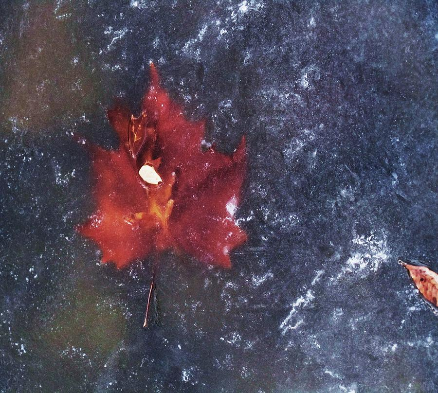 Red Leaf In Ice Photograph