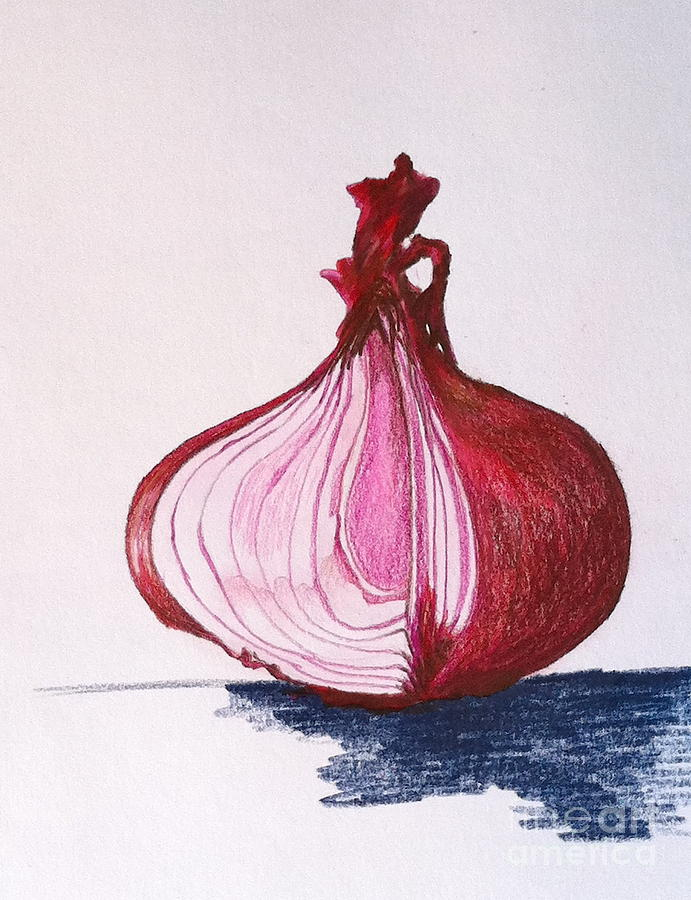 Red House Drawing: Red Onion By Sheron Petrie
