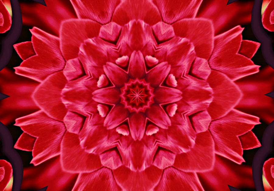 Red Rose Kaleidoscope Photograph  - Red Rose Kaleidoscope Fine Art Print