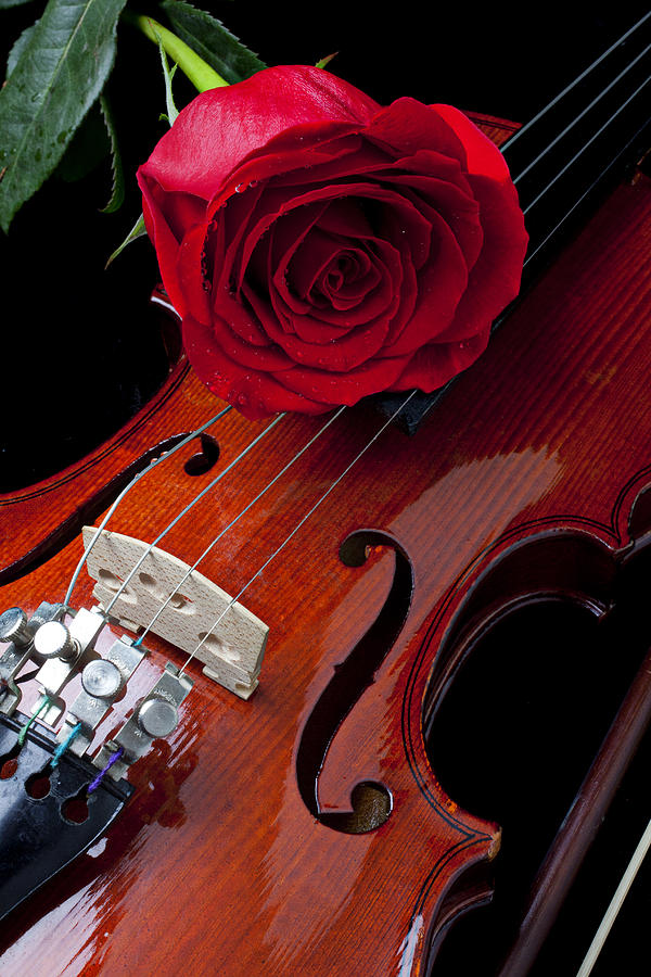 Red Rose With Violin Photograph  - Red Rose With Violin Fine Art Print