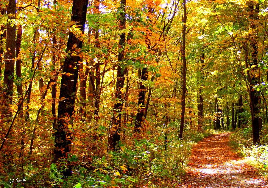 Red Run Trail Photograph