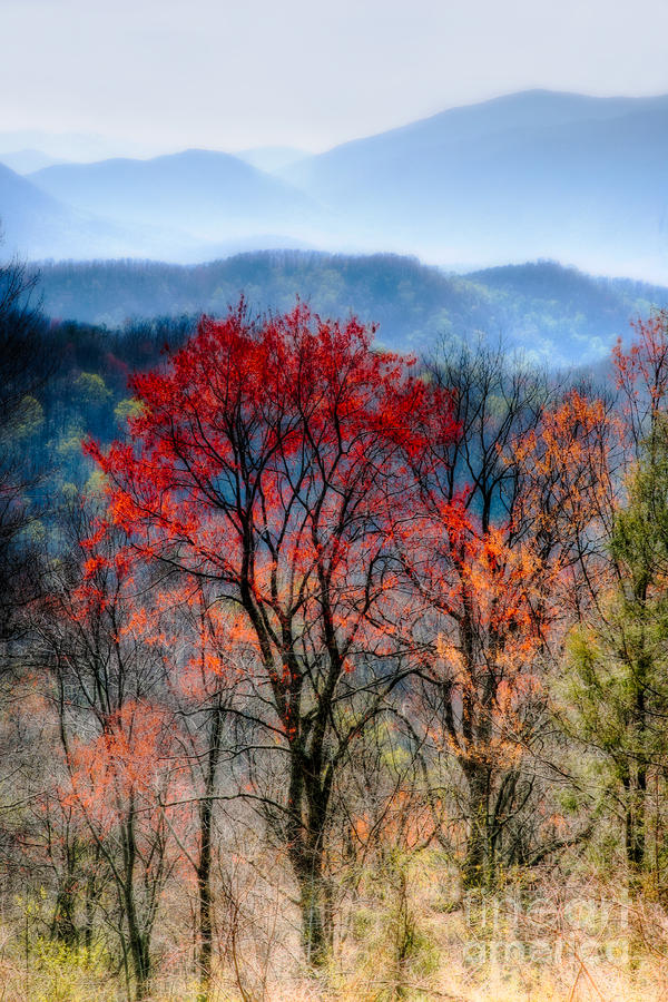 Red Spring Photograph