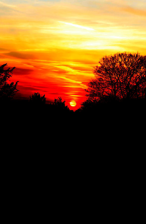 Red Sunset Vertical Photograph