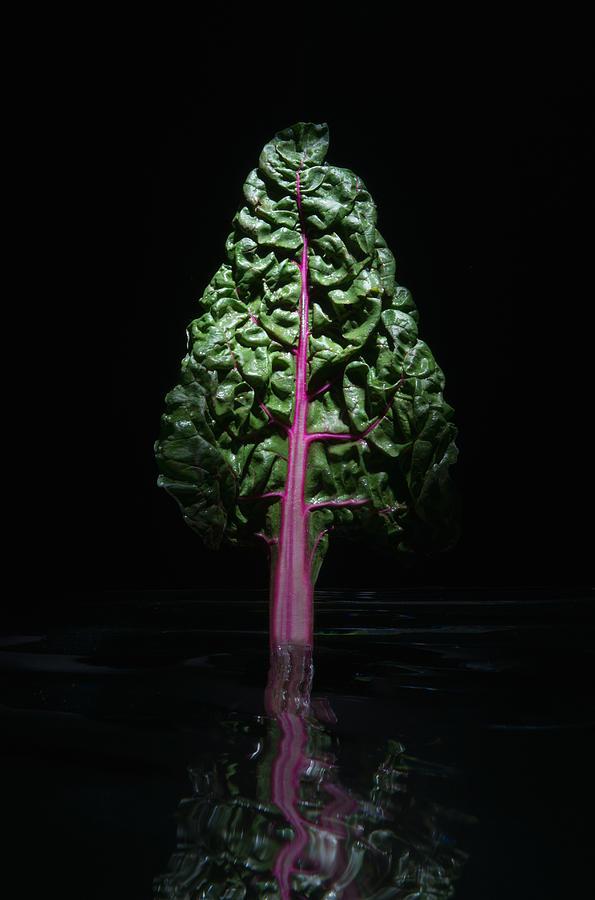 Red Swiss Chard Leaf Photograph