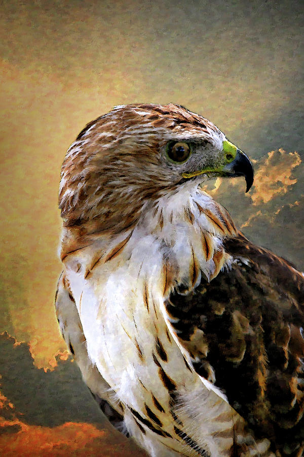 Red Tailed Hawk Digital Art