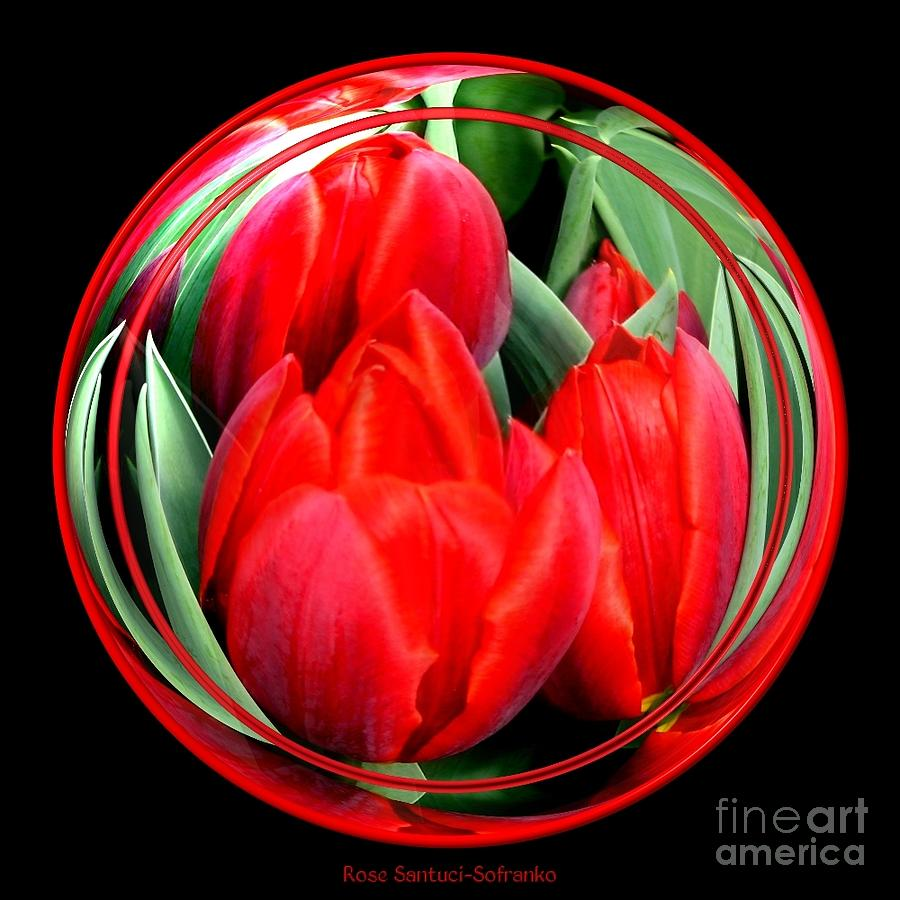Red tulips under glass photograph by rose santuci sofranko for Rose under glass