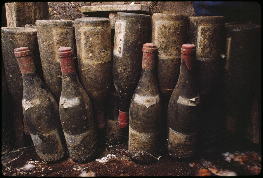 Red Wine Bottles, Covered With Mold Photograph  - Red Wine Bottles, Covered With Mold Fine Art Print