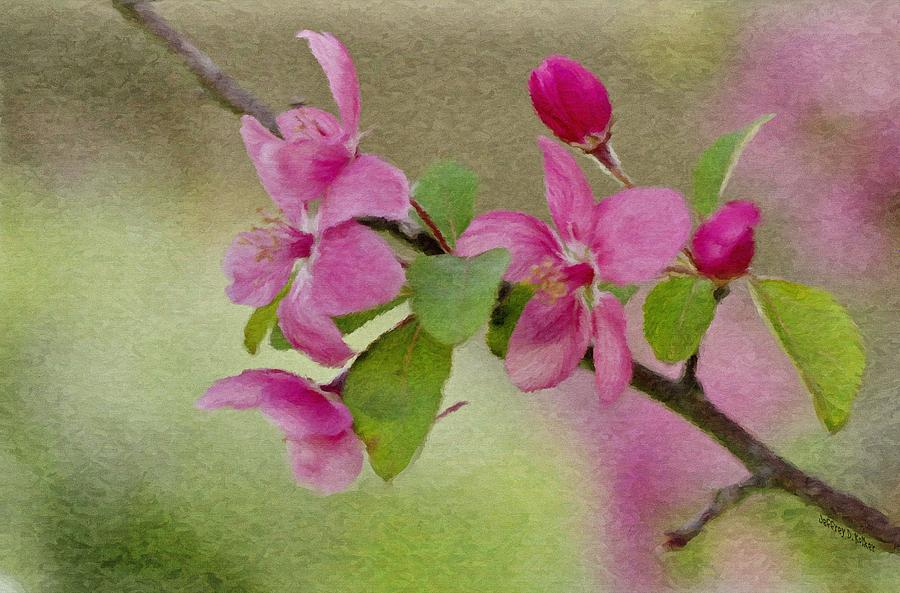 Redbud Branch Painting  - Redbud Branch Fine Art Print