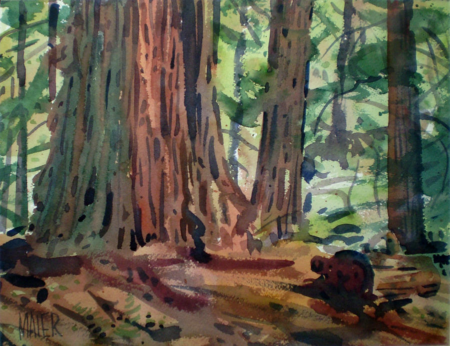 Redwoods by Donald Maier Redwood Tree Painting