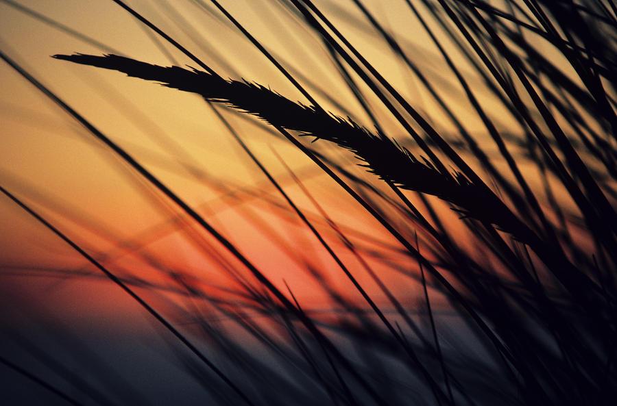 Reeds And Sunset Photograph