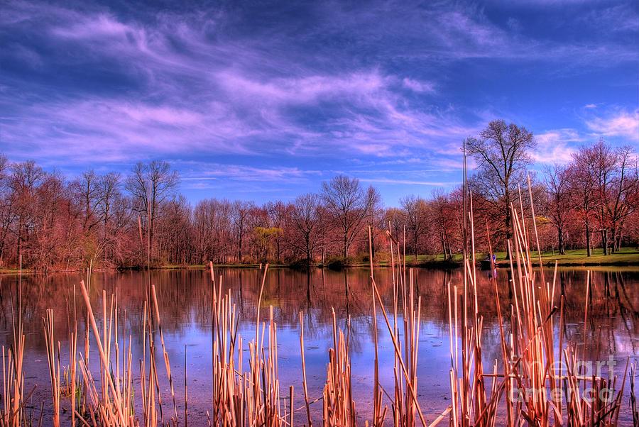 Reeds Photograph