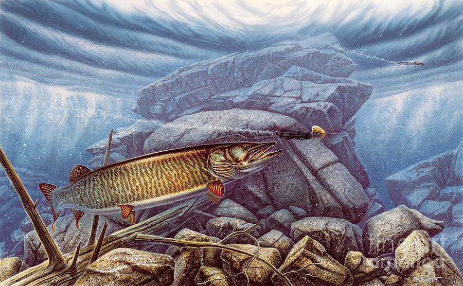 Reef King Musky Painting  - Reef King Musky Fine Art Print