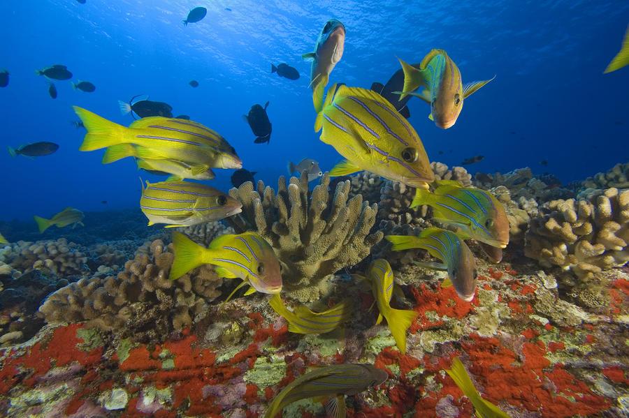 Reef Scene Photograph