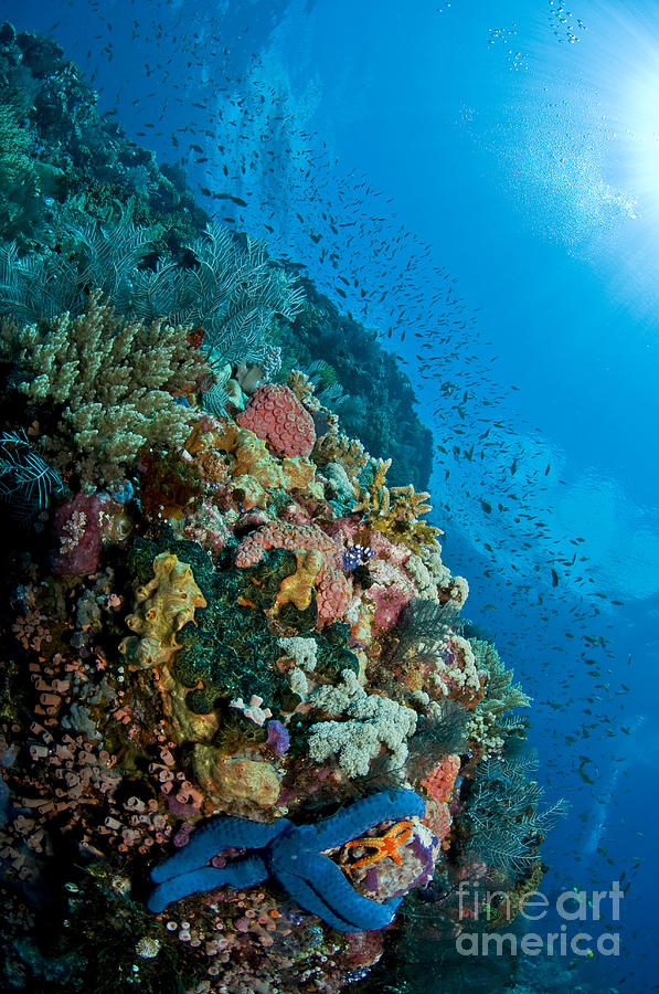 Reef Scene With Corals And Fish Photograph