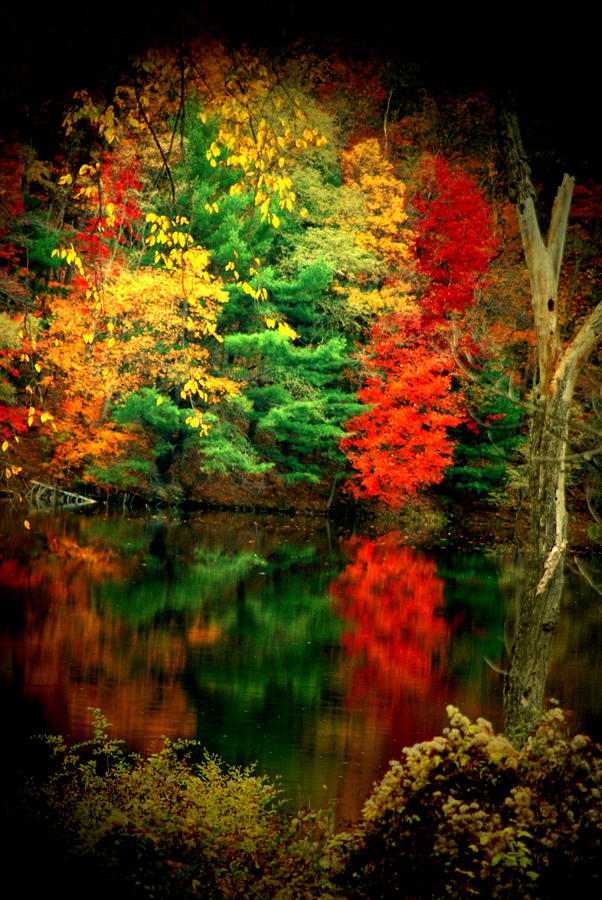 Reflecting On Fall Photograph  - Reflecting On Fall Fine Art Print