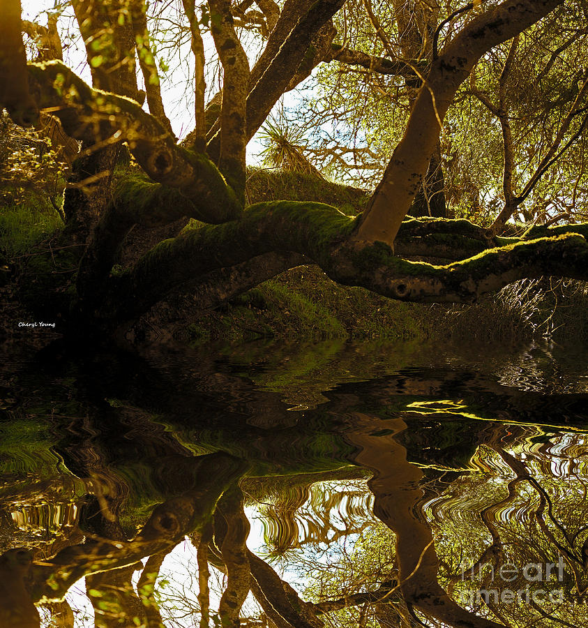Reflecting Tree Photograph  - Reflecting Tree Fine Art Print