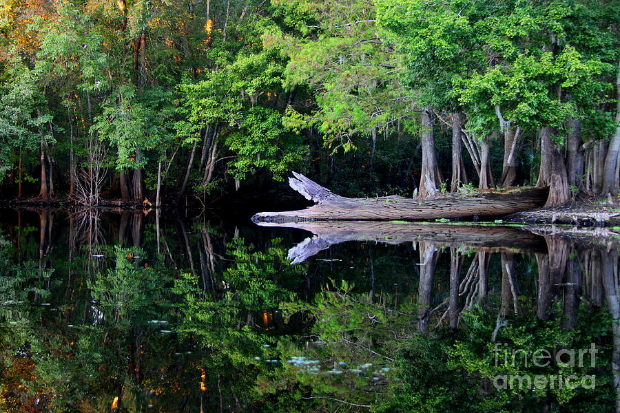 Reflection Off The Withlacoochee River Photograph  - Reflection Off The Withlacoochee River Fine Art Print