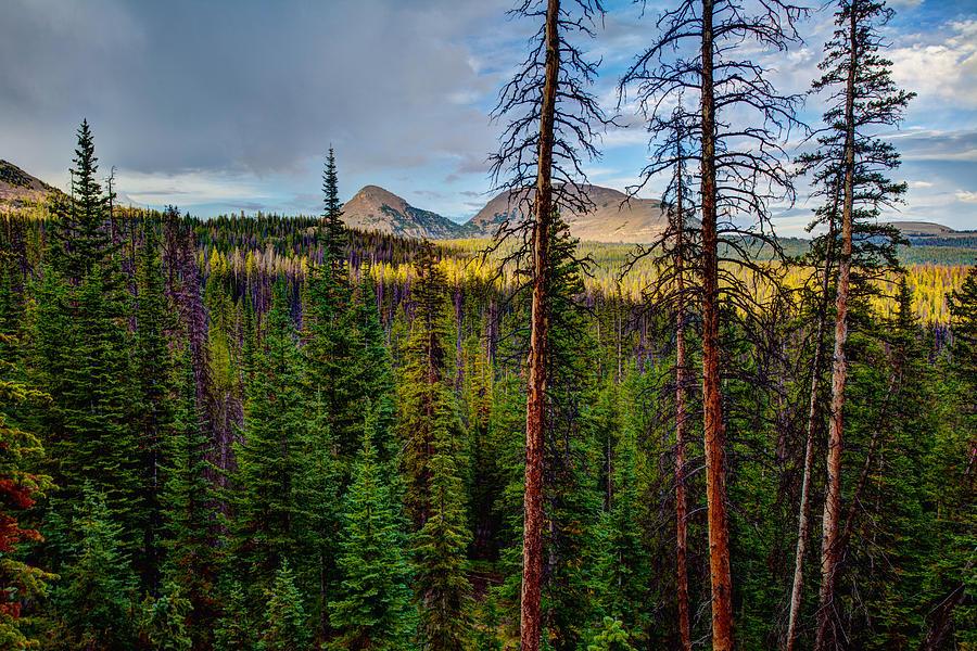 Reids Peak Photograph