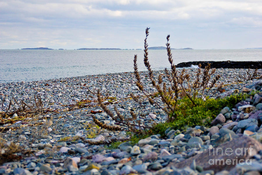 New England Coast Photograph - Relax by Extrospection Art