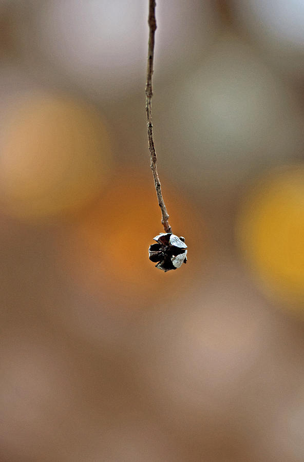 Minimalist Photograph - Remnance by Danielle Del Prado