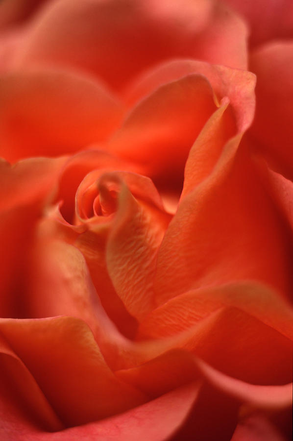 Floral Photograph - Repose by Kathy Yates