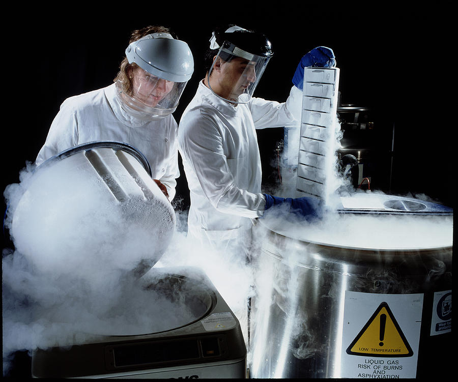 Researchers Handling Trays Of Frozen Bacteria Photograph