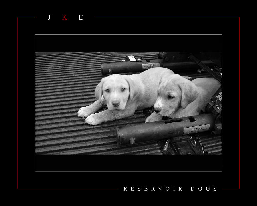 Reservoir Dogs Photograph  - Reservoir Dogs Fine Art Print