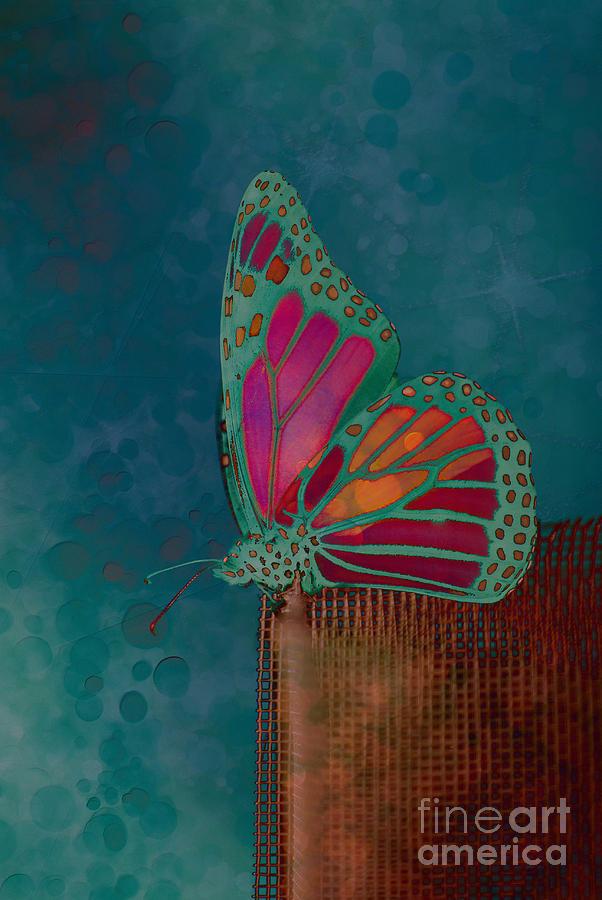 Reve De Papillon - S04bt02 Photograph