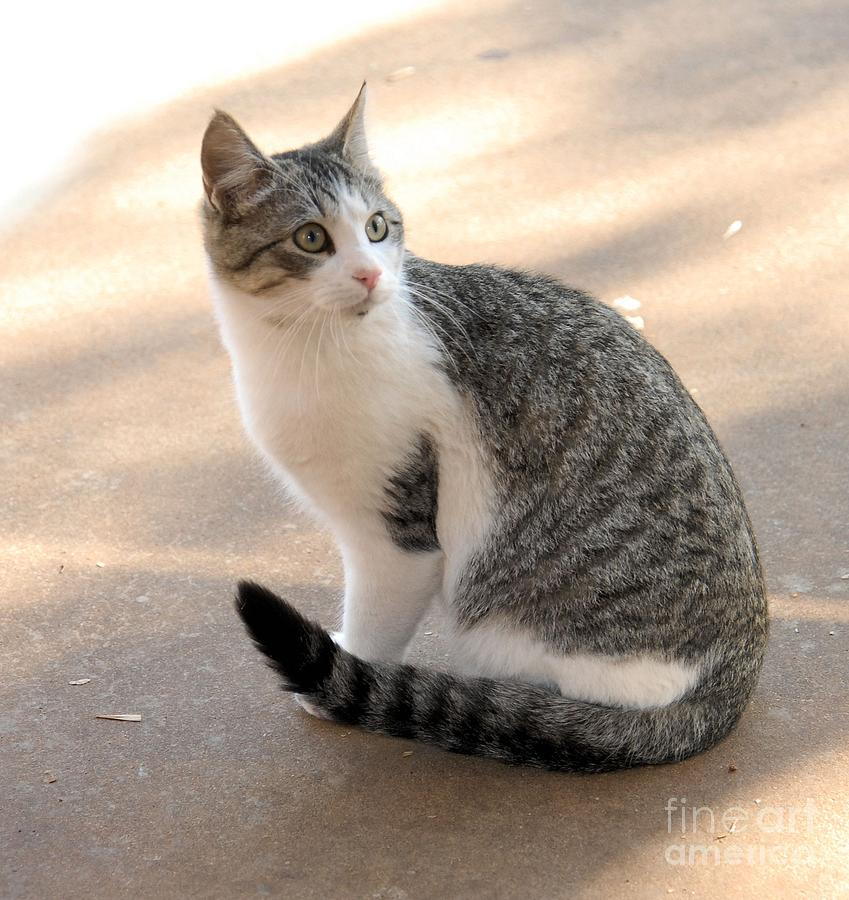 Cat Photograph - Rex by Cheryl Poland