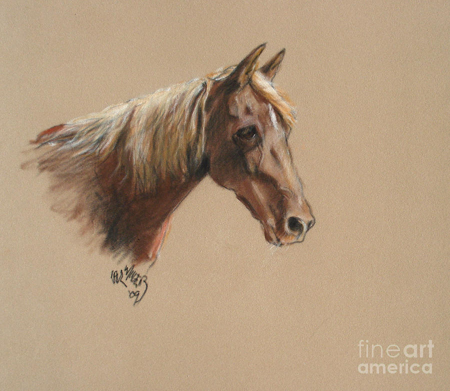 Reyena At The Morgan Horse Ranch Prns Painting  - Reyena At The Morgan Horse Ranch Prns Fine Art Print