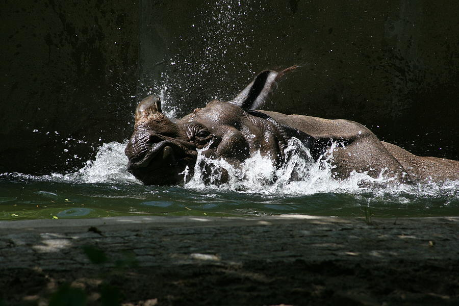 Rhino Bath Photograph