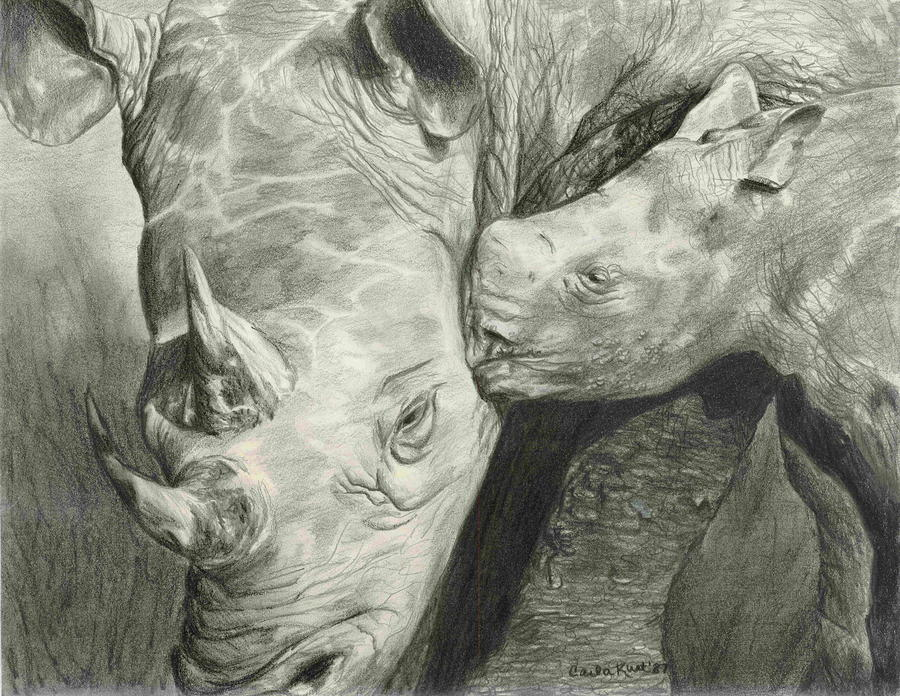 Rhino Love Drawing  - Rhino Love Fine Art Print