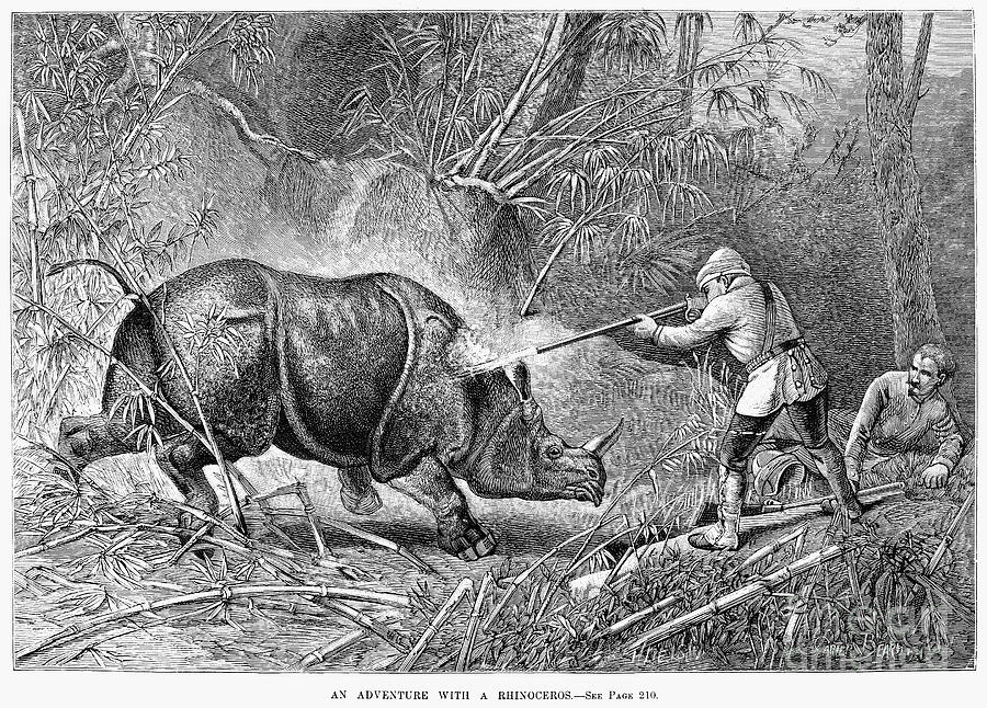 Rhinoceros Hunt, 1889 Photograph  - Rhinoceros Hunt, 1889 Fine Art Print