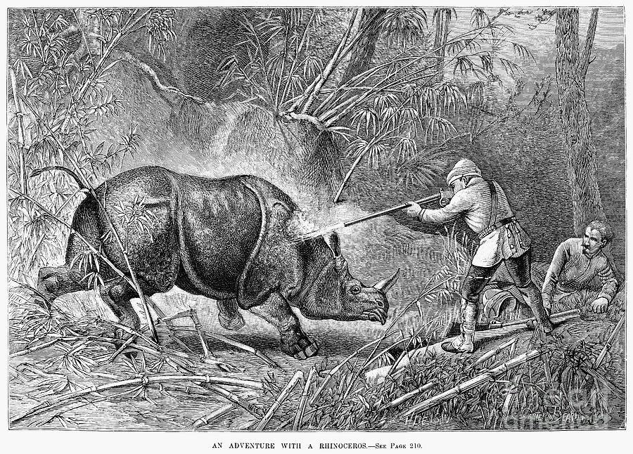 Rhinoceros Hunt, 1889 Photograph