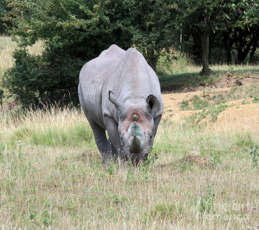 Rhinocerous 13 Photograph