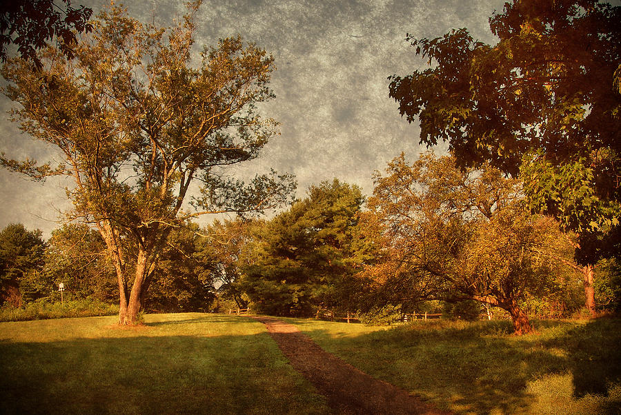Ridge Walk - Holmdel Park Photograph