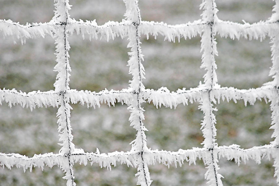 Rime Covered Fence Photograph